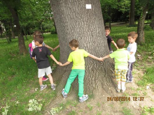 deca oko drveta